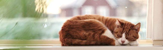 Kat in de zon, op verwarming.